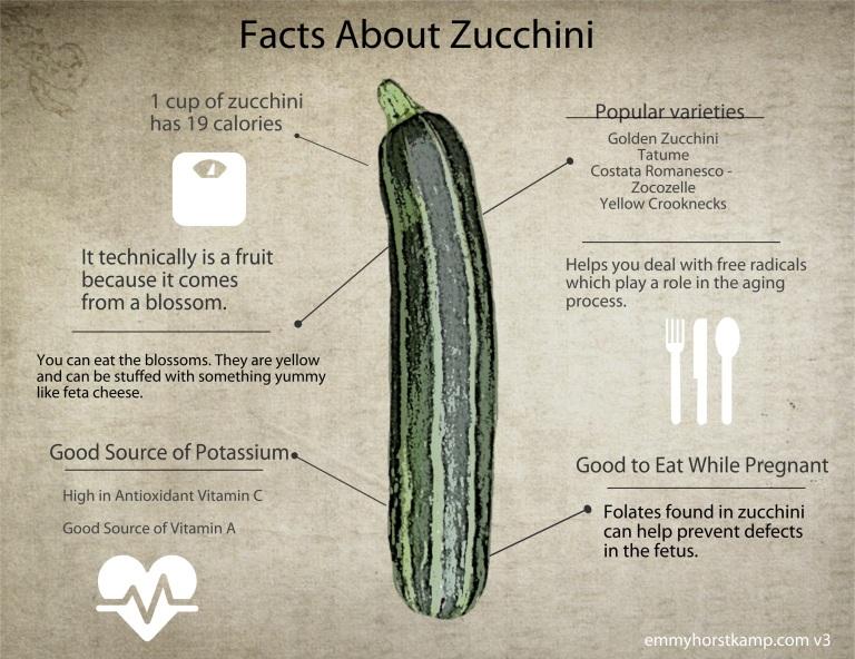 v3zucchinifacts